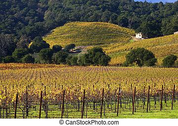 boerderij, heuvels, na, bomen, wijngaarden, groene, gele, herfst, wijngaarden, witte
