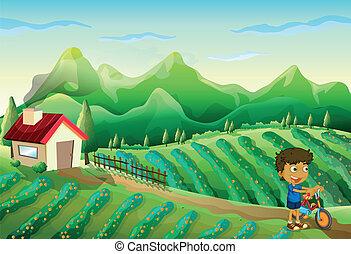 boerderij, jongen, fiets