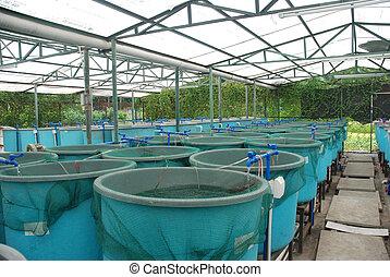 boerderij, landbouw, aquaculture