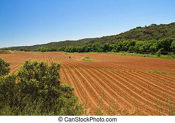 boerderij, lege, akker, in, lente