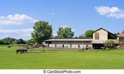 boerderij, met, paarden, dichtbij, suno, novara