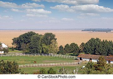 boerderij, met, paarden, in, kraal, landscape
