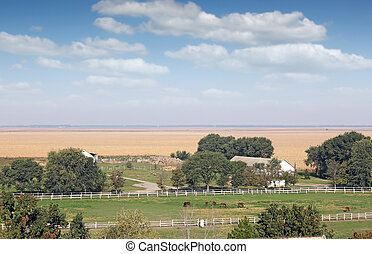 boerderij, met, paarden, kraal, en, stal, landscape