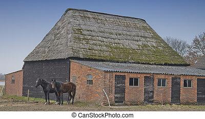 boerderij, met, paarden