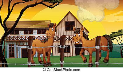 boerderij, paarden, twee