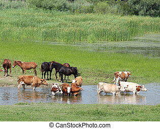 boerderij, rivier, dieren
