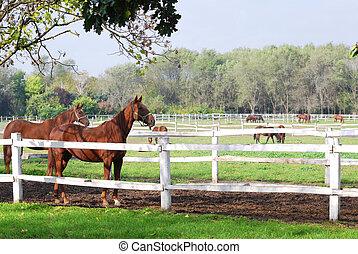 boerderij, scène, met, paarden