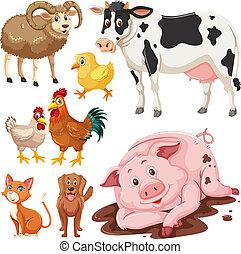 boerderij, set, dieren
