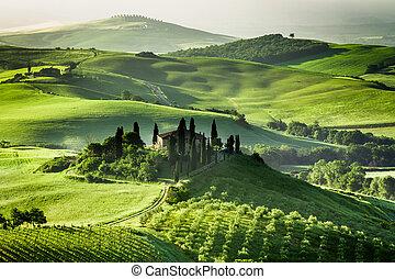 boerderij, van, olive, bosjes, en, wijngaarden