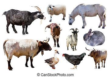 boerderij, witte , set, dieren