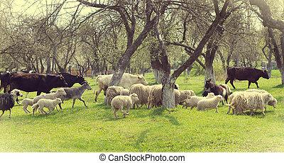 boerderijdieren, in de tuin