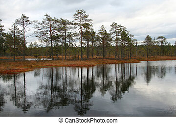 Bog lakes in autumn