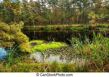 Bog Landscape in Mecklenburg-Western Pomerania in Germany