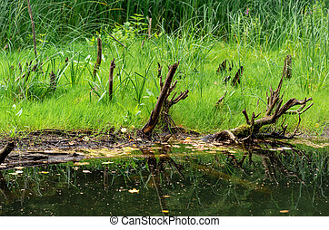 bog shore with water, grass and snags