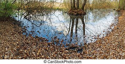 bog in the spring forest