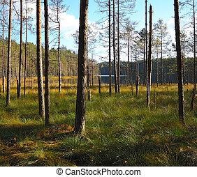 Boggy coast of wild lake, Russia, Leningrad region, Karelian...