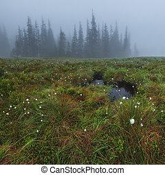 bog - small bog in foggy meadow