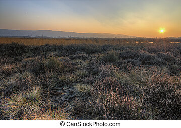 Bog - The picture shows a peat bog at sunset.