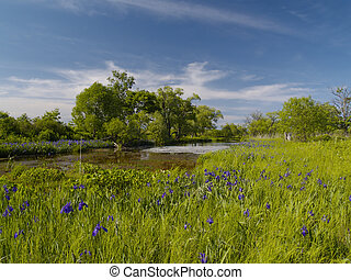 Bog with blossoming coast
