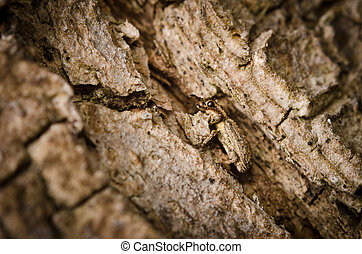 bogue, camouflage