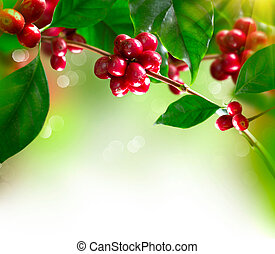 bohnenkaffee, reif, baum, bohnen, zweig, plant.