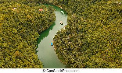 bohol., フィリピン, loboc, 川, rainforest