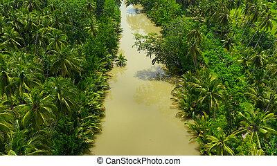 bohol, 川, jungle., フィリピン。