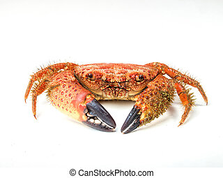 boiled crab isolated on white background