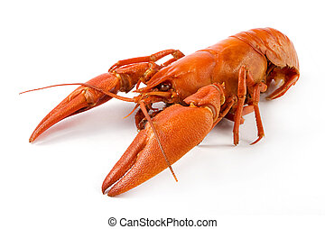 Boiled crawfish over white