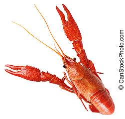 Boiled Crawfish - Single big red boiled crawfish