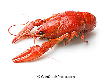 Boiled crawfish is isolated on a white background