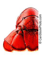 Boiled lobster isolated tail
