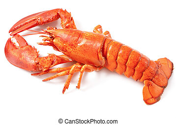 boiled lobster on the white background