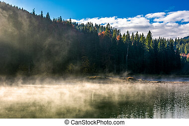 boiling water of lake in spruce forest. beautiful nature...