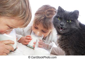 boire, chat, lait, enfants
