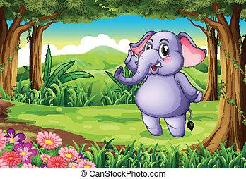 bois, éléphant