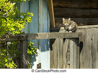 bois, élevé, chat, barrière, regarder