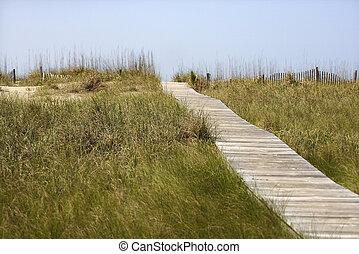 bois, accès, plage., chemin