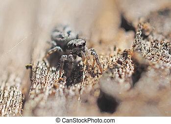 bois, araignés