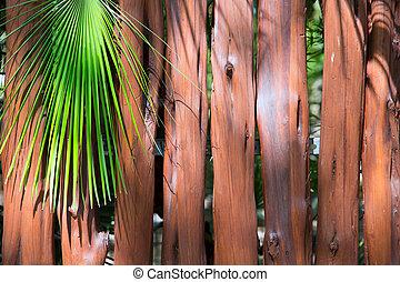 bois, arbre, exotique, paume, coffre, wll