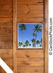 bois, arbres, exotique, fenêtre, paume, vue