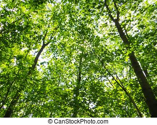 bois, arbres