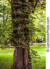 bois, arbres., vert, backgrounds., forêt, nature, lumière soleil