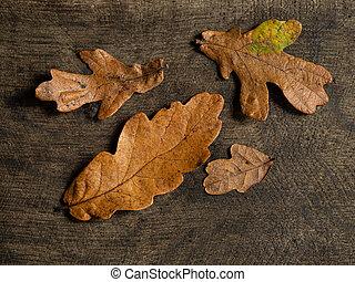 bois, automne, congés tombés, fond