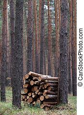 bois brûler, forêt, pin, pile