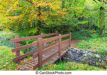 bois, brun, forêt, mener, pont