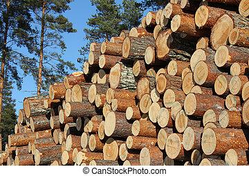 bois construction, empilé, journaux bord, forêt pin
