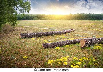 bois, coucher soleil, clairière