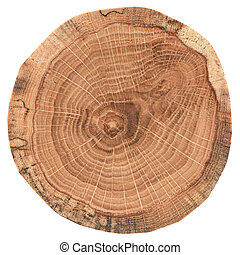 bois, couper, chêne, section, arbre, croix, texture, isolé, rings., croissance, fond, blanc, morceau, circulaire