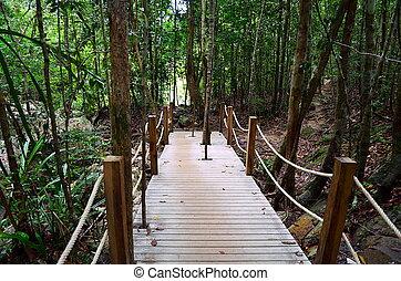 bois, fait, étapes, jungle, escalier
